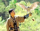 Falconry a living human heritage (2010) 이미지